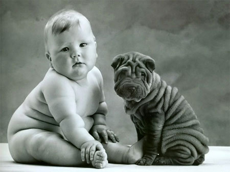 Baby Puppies on Fat Babies  Ben Affleck  And The Demise Of Loneliness    The Girl With